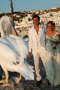 wedding ????? 255