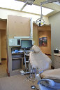 Dental Office Op Exam Room- EnviroMed Design Group