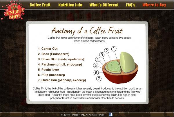 Coffee Fruit Energy - Anatomy