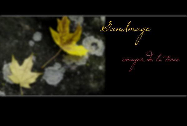 Accueil - Ganimage