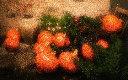 pumpkins.gr