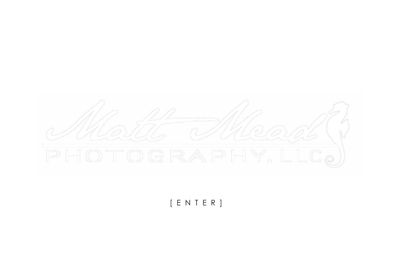Matt Mead Photography - Underwater Life Stock Photography