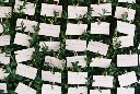 Boxwood Place Card Wall
